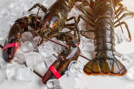 Ice cubes beside raw lobsters.
