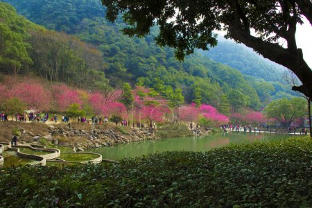 Photo for Gardening flowers, cherry blossoms in full bloom, pink flowers, green branches and leaves, castle peak green water, beautiful ecological environment. - Royalty Free Image