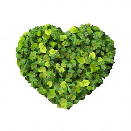 Heart made from green leaves.