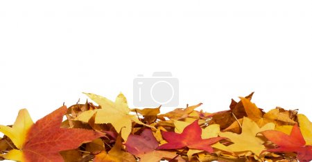 Pile of colorful fall leaves