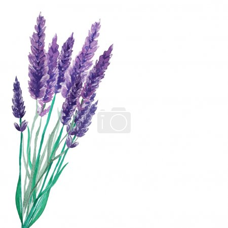 Illustration for Lavender flowers frame. Watercolor hand drawn background. Vector illustration. - Royalty Free Image