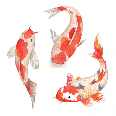 Illustration for Watercolor oriental rainbow carp set. Isolated hand drawn fishes. Underwater wildlife illustration in vector - Royalty Free Image