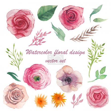 Illustration for Watercolor herbs, ranunculus, anemone, roses elements set. Vintage leaves, flowers and branches. Vector hand drawn design illustration - Royalty Free Image