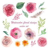 Watercolor herbs ranunculus anemone roses elements set Vintage leaves flowers and branches Vector hand drawn design illustration
