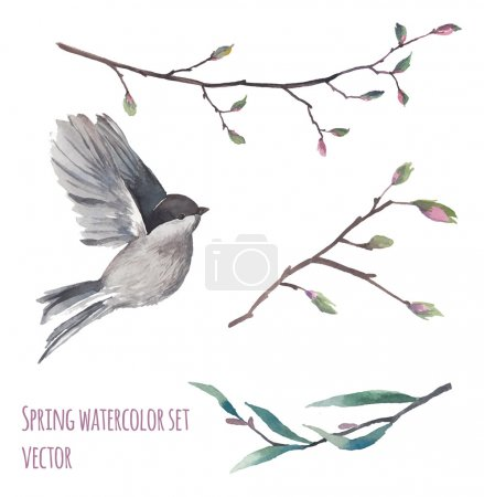 Illustration for Watercolor flying bird and tree twigs with buds. Spring artistic elements isolated on white background. Vector hand drawn illustrations set - Royalty Free Image