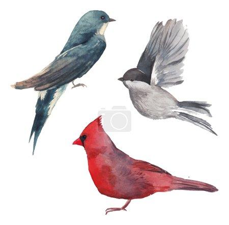 Aquarelle oiseaux ensemble