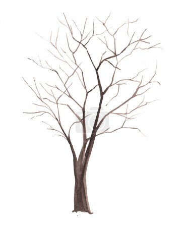 Watercolor tree without leaves isolated