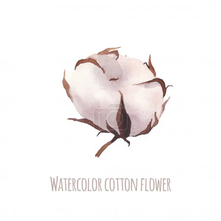 Illustration for Watercolor cotton flower. Hand drawn single cotton flower isolated on white background. Vector floral illustration - Royalty Free Image