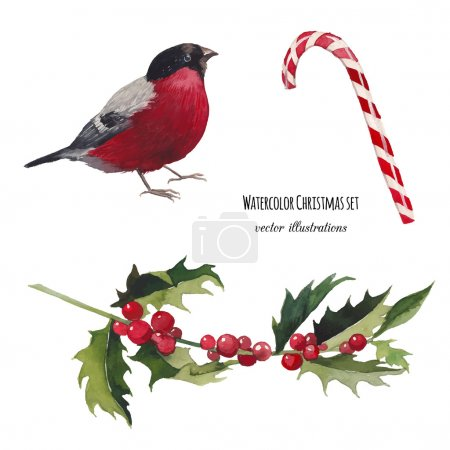Illustration for Watercolor Christmas set. Hand drawn bullfinch bird, striped candy and mistletoe branch isolated on white background. Vintage vector objects collection for holiday design - Royalty Free Image