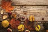 Chestnuts and autumnal maple leaves on the wooden background with film filter effect