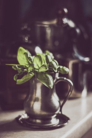 Green basil in the old metal jar with blurred pots and pans