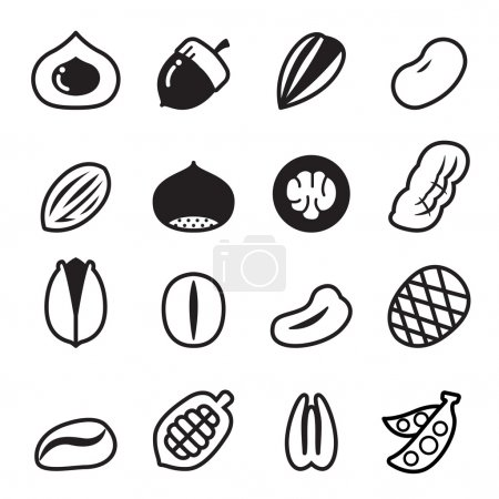 Nut icons Vector illustration Set 2