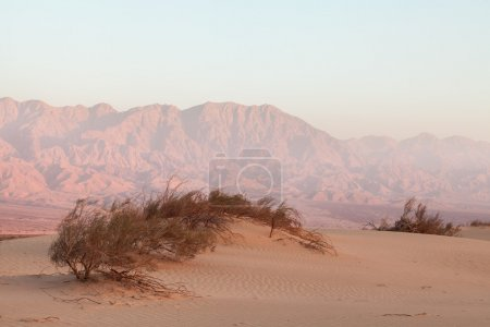 Oasis in the desert at sunset