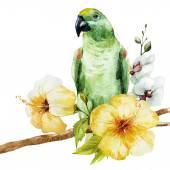 Akvarel papoušek
