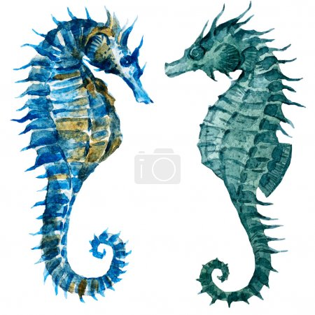 Watercolor seahorses