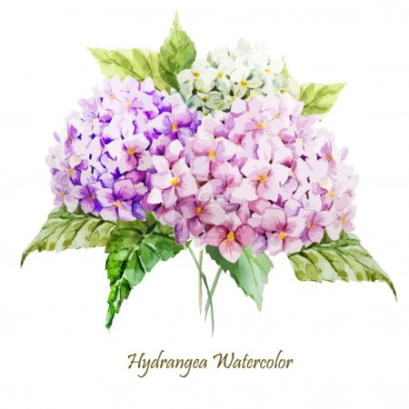 Illustration for Watercolor hydrangea flowers bouquet - illustration - Royalty Free Image