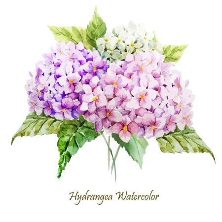 Illustration pour Bouquet de fleurs d'hortensia aquarelle - illustration - image libre de droit