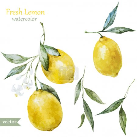 Illustration for Beautiful watercolor vector pattern with yellow lemons on brunch - Royalty Free Image