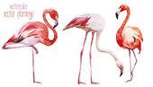 Flamingo set