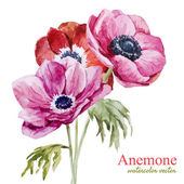 Beautiful vector illustration with nice watercolor anemones