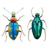 Beautiful vector image with nice watercolor bug beetle