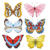 Acquerelli farfalle