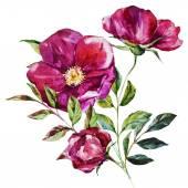 """Постер, картина, фотообои """"акварельные цветы"""""""