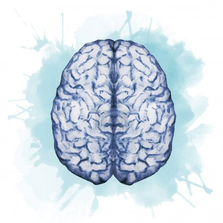 Illustration for Beautiful vector image with nice watercolor brain - Royalty Free Image