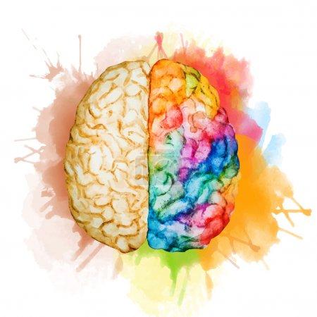 Illustration pour Belle image vectorielle avec beau cerveau aquarelle - image libre de droit