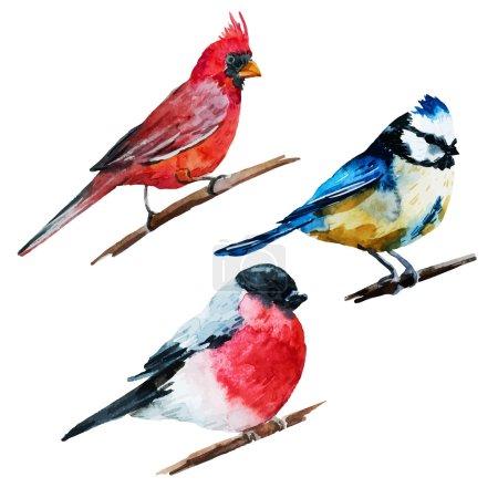 Illustration pour Belle image vectorielle avec de beaux oiseaux aquarelle - image libre de droit
