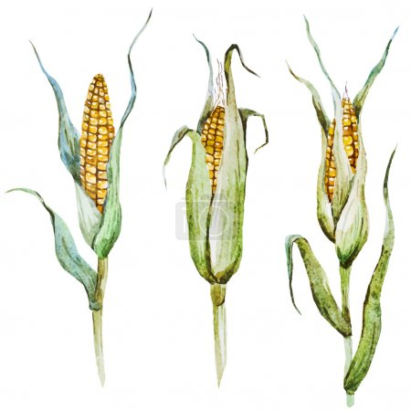 Illustration for Beautiful vector image with nice watercolor corn - Royalty Free Image