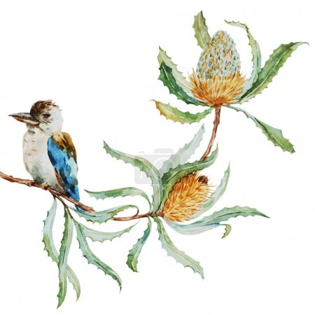 Australian kookaburra bird