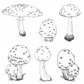 Nice vector hand drawn mushrooms
