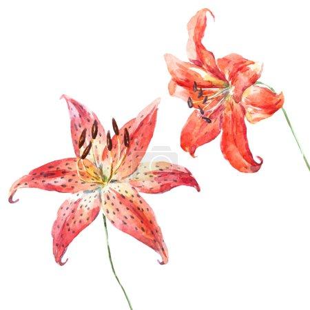 Vector watercolor lilies