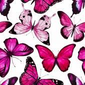 Vettore del reticolo di farfalla dellacquerello