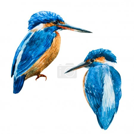 Watercolor vector blue kingfisher bird