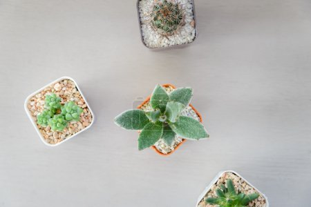 Top view of small cactus plant in flowerpot on wooden table