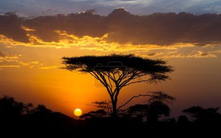 Sunset and Acacia tree in the Serengeti, Tanzania