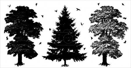 Illustration for Three silhouettes of trees which differ among themselves by form. Vector illustration. - Royalty Free Image