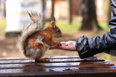 On a rainy day girl feeding lint-free protein with hands pine nuts
