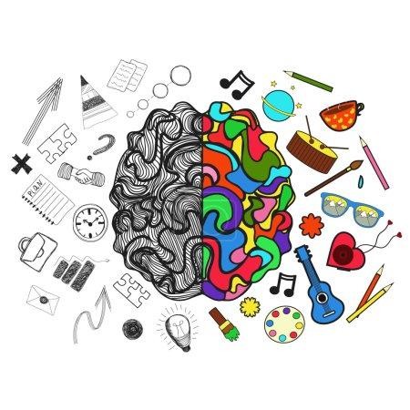 Illustration pour Illustration vectorielle. Hémisphères droit et gauche du cerveau. Parties analytiques et créatives d'entre eux - image libre de droit