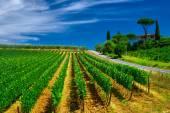 Tuscany maison de ferme viticole