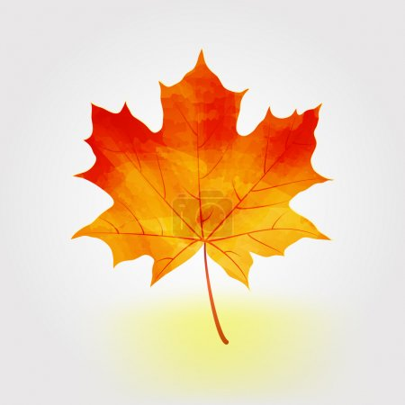 Autumn maple leaf vector illustration