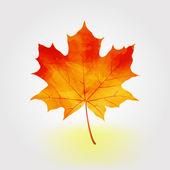 Colorful autumn maple leaf vector