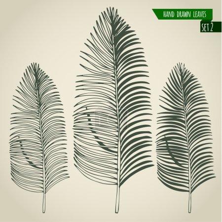 Photo pour Ensemble de feuilles de palmiers tropicaux dessinées à la main. Illustration vectorielle . - image libre de droit