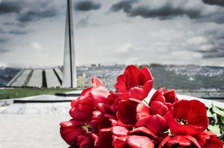 Red tulips in Tsitsernakaberd memorial