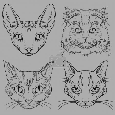 Set of Hand Drawn Wild Cat Portraits isolated