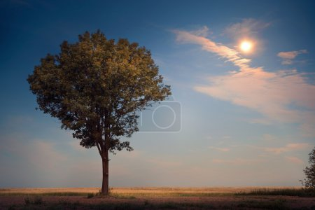 lonely tree in the moonlight