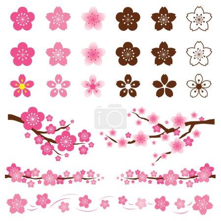 Illustration for Cherry Blossoms or Sakura in Japanese Set - Royalty Free Image