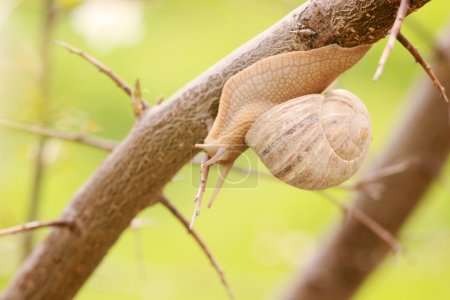 Snail on the branch of tree